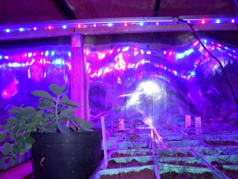 LED Plant Grow (do wzrostu roślin)